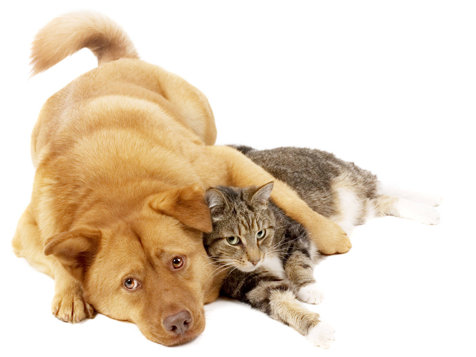 Pets and Essential oils - how to use them respectfully with pets