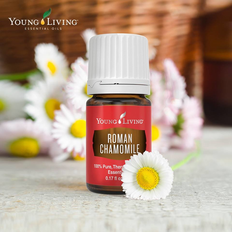 Roman Chamomile is Back!!!