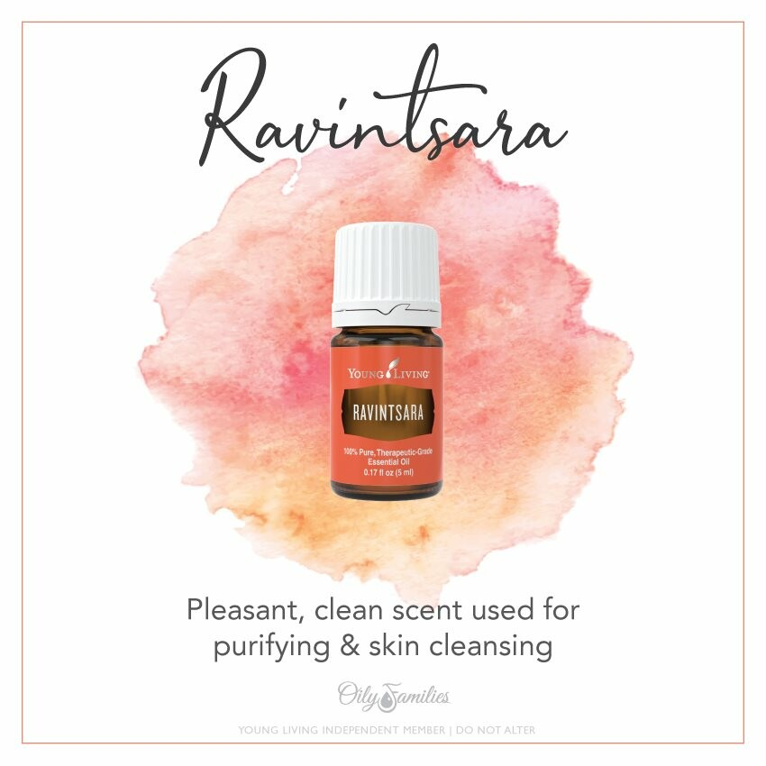 Refresh With Ravintsara Essential Oil - A Hidden Gem In Your Oil Drawer!