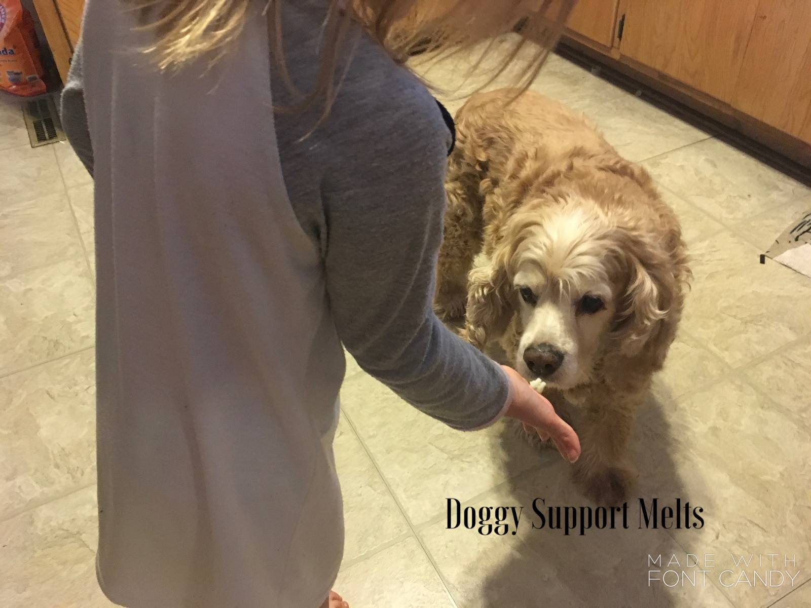 Doggy support melts
