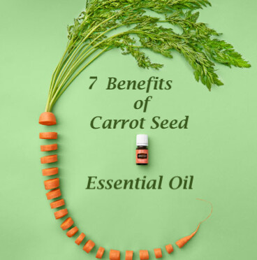 7 Surprising Benefits of Carrot Seed Essential Oil