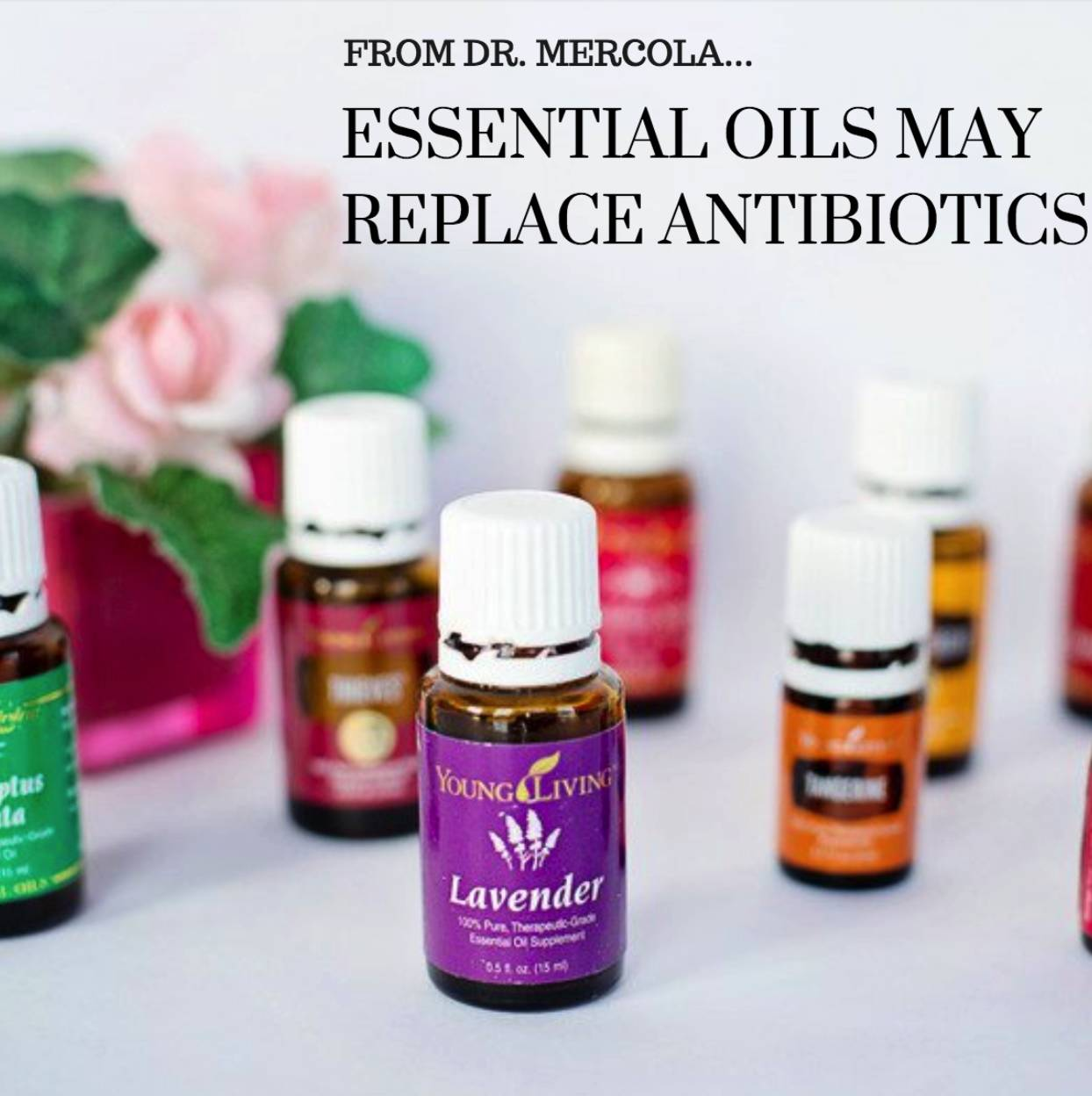 Essential Oils May Replace Antibiotics per Dr. Mercola