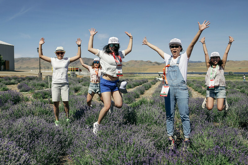 Guide To The Young Living Lavender Farm In Mona Utah