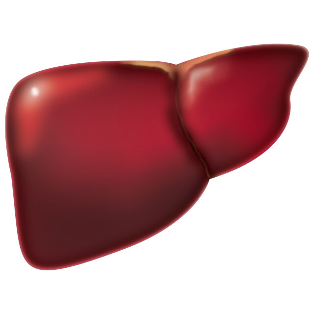 Thyroid Liver Connection