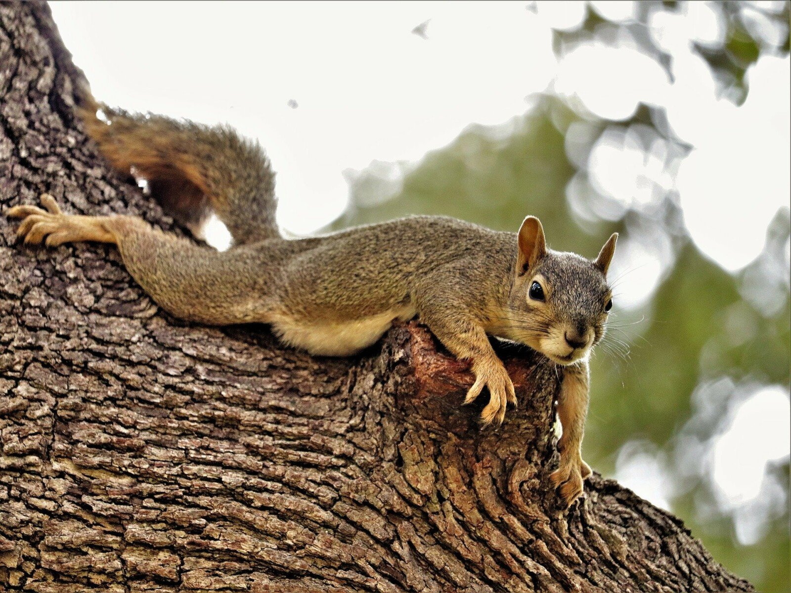 Hormonal Squirrels - What's the Connection?