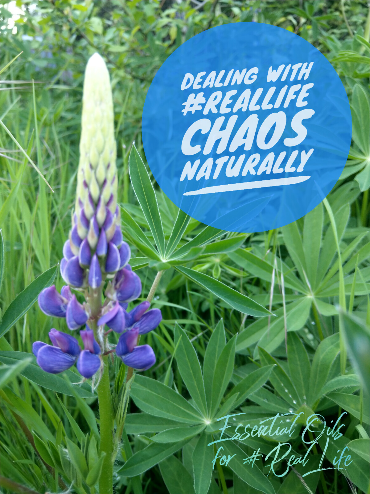 Dealing with #RealLife Chaos Naturally