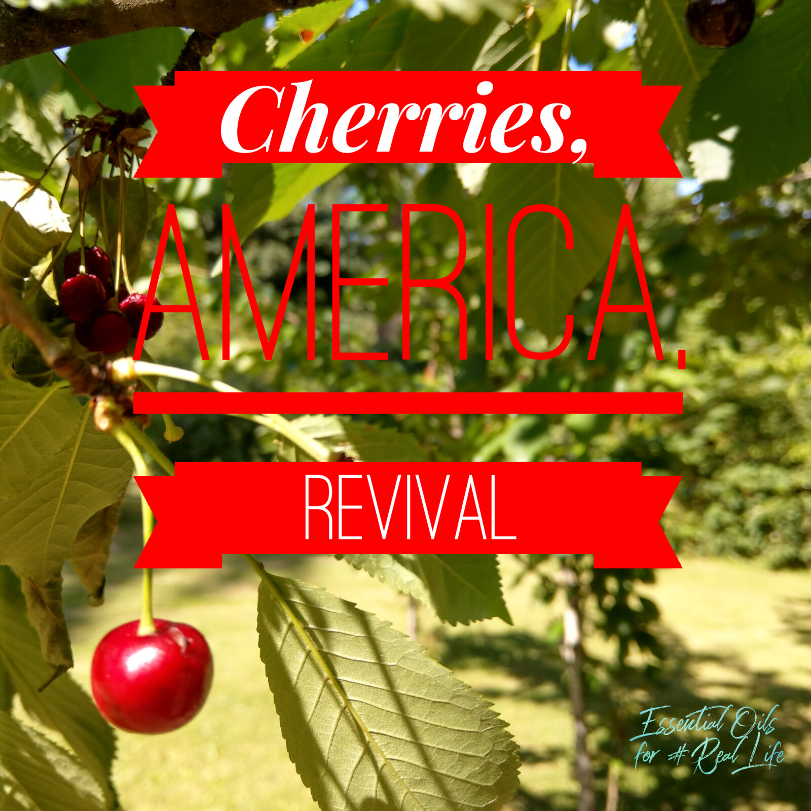 Cherries, America, Revival