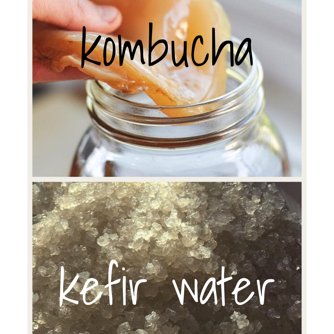Kefir water vs. Kombucha