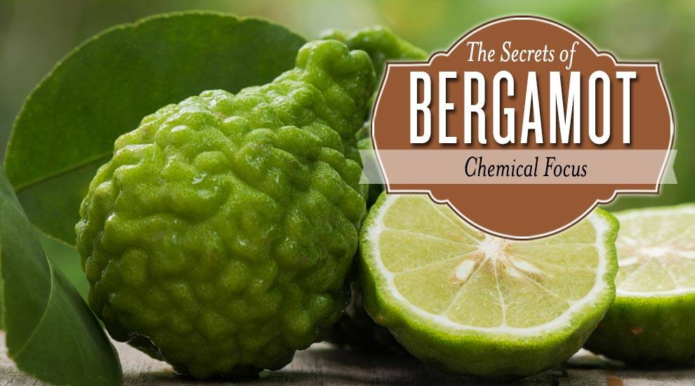 The Secrets of Bergamot