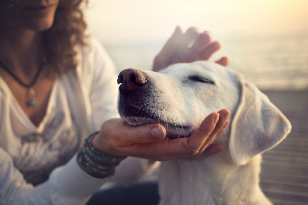 Reiki Energy For Dogs