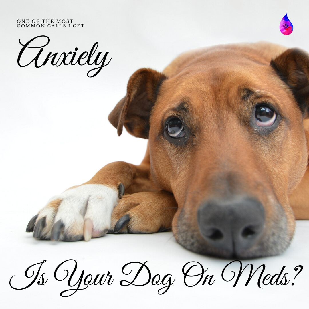 Anxiety Emotion In Dogs