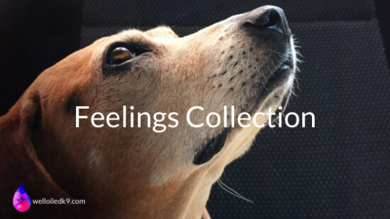 Feelings Essential Oil Kit For Dogs